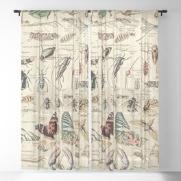 Vintage Insect Identification Chart // Arthropodes by Adolphe Millot XL 19th Century Science Artwork Sheer Curtain