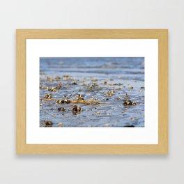 Shells in the sand 3 Framed Art Print