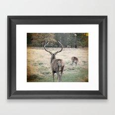 Deer III Framed Art Print