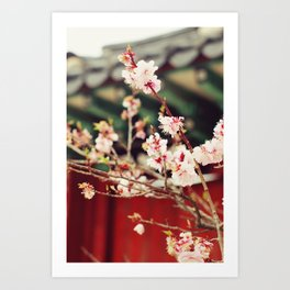 Spring Changdeokgung palace, Seoul, Korea Art Print