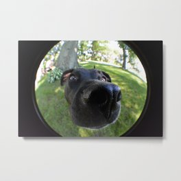 Puppy In Fish Eye Metal Print