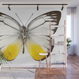 """Butterfly species Cepora judith """"orange gull"""" Wall Mural"""