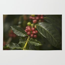 Coffee Seeds Rug