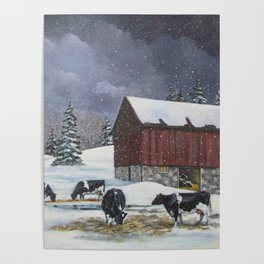 Holstein Dairy Cows in Snowy Barnyard; Winter Farm Scene Poster