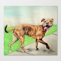 pitbull Canvas Prints featuring pitbull by Shannon Gordy