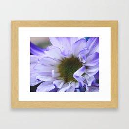 Purple Flush Framed Art Print