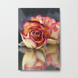 Dried Rose And Reflection In Mirror Metal Print