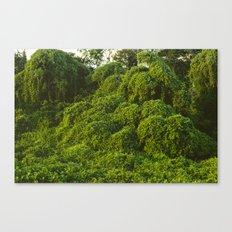 Jungle Plants in Pantanal, Brazil. Canvas Print