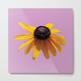 Rudbeckia Purple Metal Print