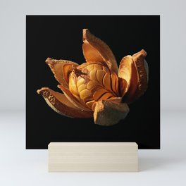 Mahogany Seeds DPG150525 Mini Art Print