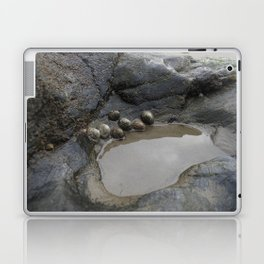 Limpets on the Edge of a Rockpool Laptop & iPad Skin