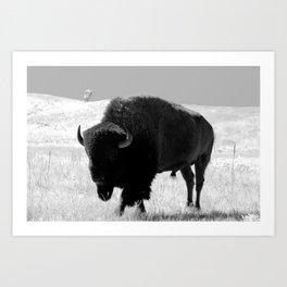 Bison On Open Range Art Print