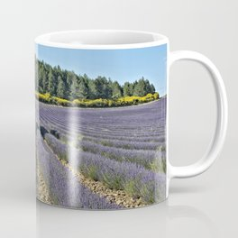 Lavender fields, Provence, France Coffee Mug