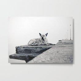 Greek beach dog Metal Print