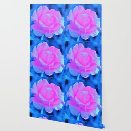 Beautiful Pastel Pink Rose with Blue Background Wallpaper