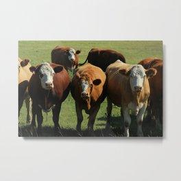 Herd of Cows on the Prairies Metal Print