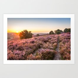 Posbank sunrise over the heather Art Print