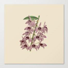 R. Warner & B.S. Williams - The Orchid Album - vol 01 - plate 042 Canvas Print
