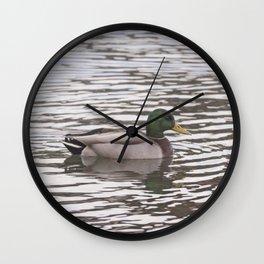 Mallard swimming Wall Clock