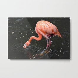 National Aviary - Pittsburgh - American Flamingo 2 Metal Print