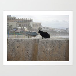 Windswept Cat Art Print
