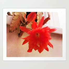 Blooming Lovely Art Print