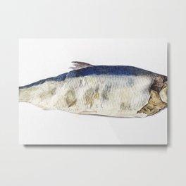 Fish Partly Perished 1833 Metal Print