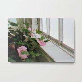 Pink Window Metal Print