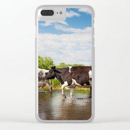 Herd of cows walking across pool Clear iPhone Case