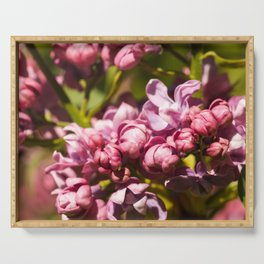 Branch of fresh purple lilac flowers in a city public park close-up Serving Tray