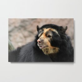 Spectacled Bear Metal Print