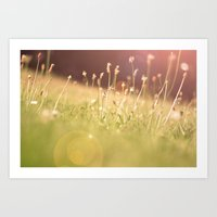 Hazy Summer Art Print