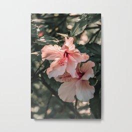 Hibiscus Flowers Metal Print