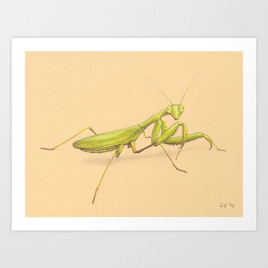 Praying Mantis by Lars Furtwaengler | Colored Pencil / Pastel Pencil | 2014 Art Print