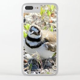 Confused Killdeer Clear iPhone Case