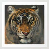 A Wise Tiger Art Print