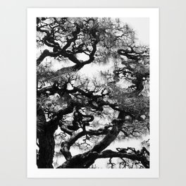 Tree of Japan (black and white edit) Art Print