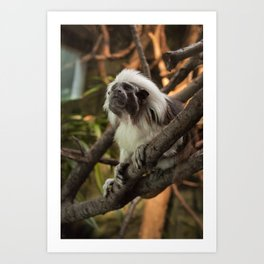 Wise Old Monkey Art Print