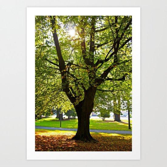 Autumn sun shines Art Print
