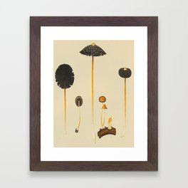 Vintage Scientific Illustration Of Mushrooms Framed Art Print