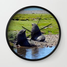 Fur Seals Wall Clock