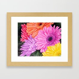COLORFUL GERBER DAISIES in WATERCOLORS Framed Art Print