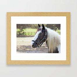 Equine Beauty Framed Art Print