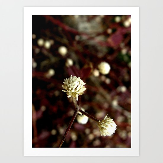Blossoms in the university Art Print