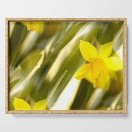 Spring atmosphere with yellow narcissus Serving Tray