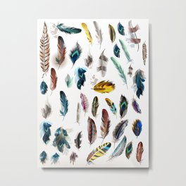 The big Feathers collection : Art Metal Print