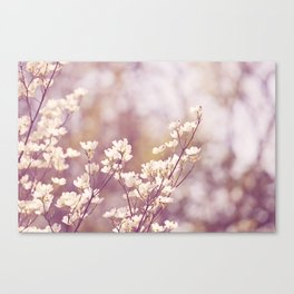 Pink White Spring Floral Photography, Dogwood Tree Blossoms, Lavender Flower Branches Canvas Print