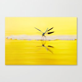 Yellow River .:. Banded Demoiselle at sundown Canvas Print