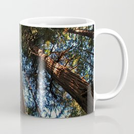 Muir Woods- horizontal Coffee Mug