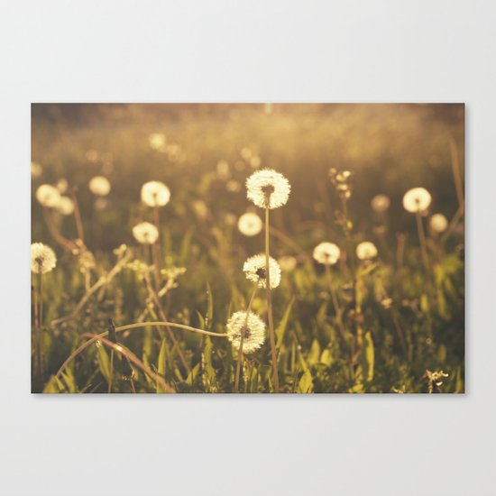 A Field of Wishes Canvas Print